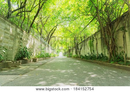 Row of tree tunnel with colorful leaves creating a tunnel above the road in morning.