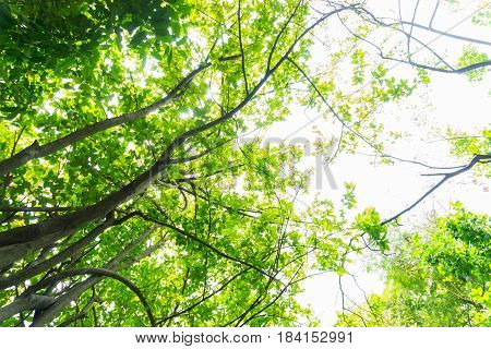 beautiful green trees forest with sunlight backgrounds.