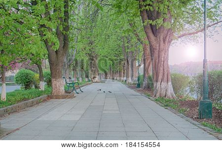 long tree alley with a disappearing footpath