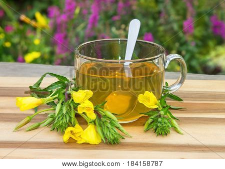 Clear Cup Of Herbal Tea From Evening Primrose.