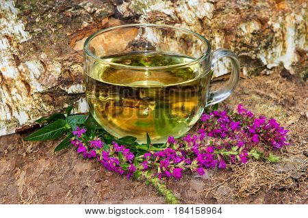 Tea Or Infusion Of Lythrum Salicaria Or Purple Loosestrife.