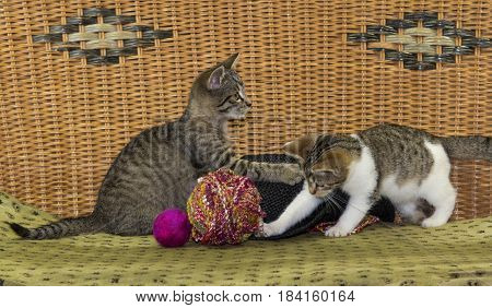 Two kitten are plkaying with a felted ball and wool.