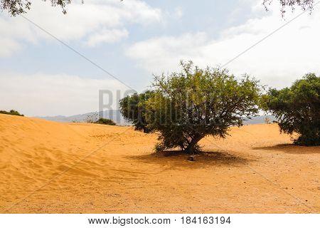 Sahara Desert, Sand And Different Plants
