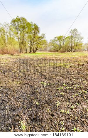 Burnt Land Close To The River