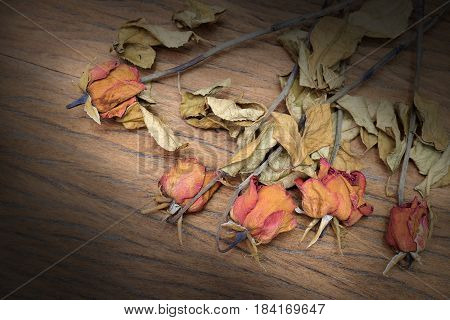 Vintage Still Life Photography With Dried Flower Of Rose Shown On The Old Beautiful Wooden Backgroun