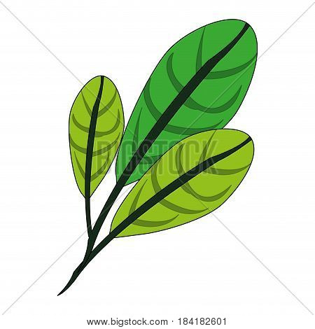 color image green leaves with ramifications vector illustration