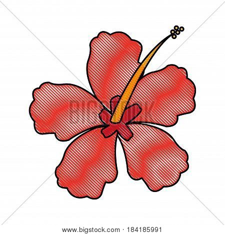 color blurred stripe image Chinese rose with trumpet shaped petals vector illustration