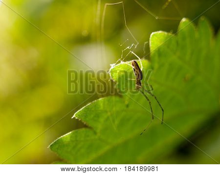 Hanging Spider In Spring With Leaf Background