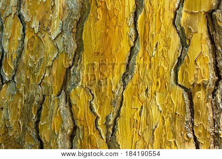 Tree trunk background - texture. Bark of tree trunk.