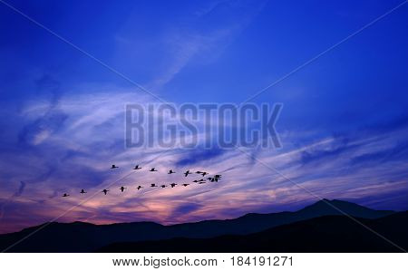Spring or autumn migration of birds over the mountain
