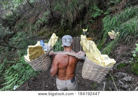 Vulcano Ijen Indonesia - 5 February 2013: Miner with their sulfur crops from the ijen crater on the island of Java Indonesia