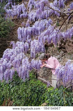 Woman smell climbing lilac flowers in the garden