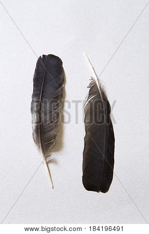 Two fblack eathers on gray paper background