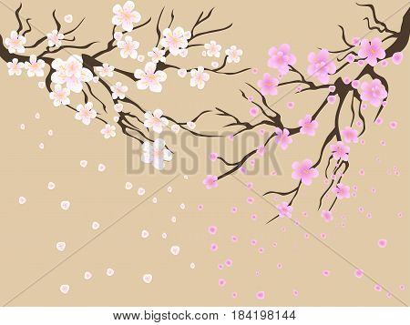 the painting of cherry blossoms drawing background