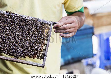 Honey Production