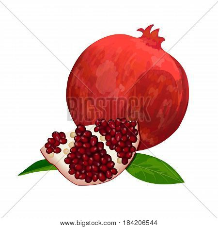 Ripe red pomegranate and slices isolated on white. Whole, slices and skinned. Side view. Close up. vector illustration. for cooking, cosmetics, Herbal medicine, health care, ointments, perfumery