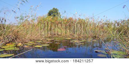 Okavango Delta, a very large, swampy inland delta formed where the Okavango River