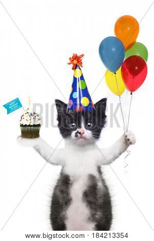 Funny Kitten Wishing You a Happy Birthday