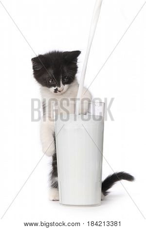 Adorable Kitten Watching Milk Pour Into a Glass