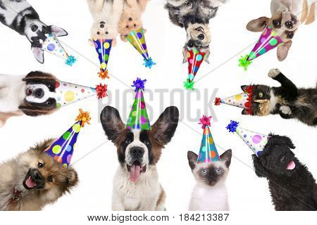 Multiple Pet Animals Isolated Wearing Birthday Hats for a Party