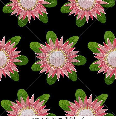 Seamless pattern of tropical flower protea and leaves. Tropic floral wallpaper on black background.