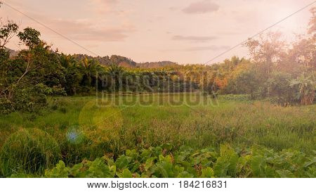 Rural landscape field and grass with sunlight and mountain in sunshine day morning.