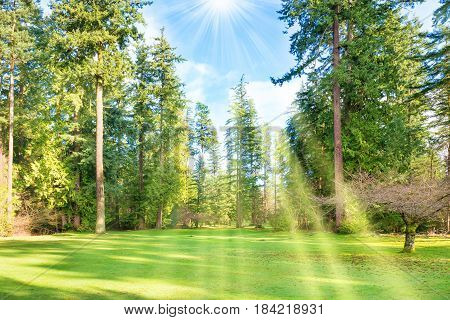 Green Sunny Park With Big Trees