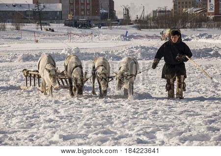 New Urengoy, YaNAO, North of Russia. March 1, 2016. The holiday of north nationality. Nenets man and north deer in winter day