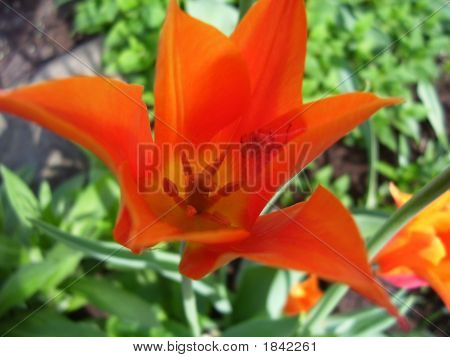 Orange Flower Spider Trap