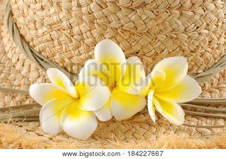 Frangipani (plumeria) flowers with starw hat