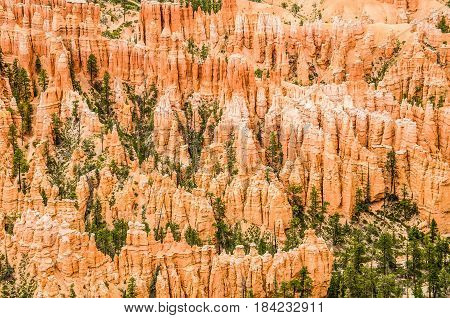 Hoodoos with pine trees closeup at Bryce Canyon National Park in Utah.