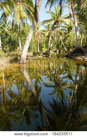 Palm Trees Of Playa Bonita At Las Terrenas