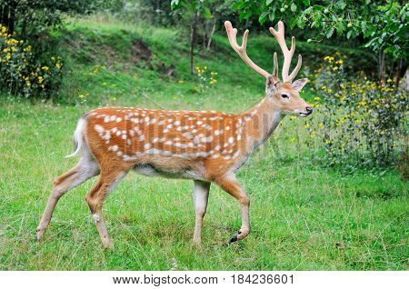 Deer On A Background Of  Nature.
