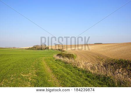 Springtime English Landscape