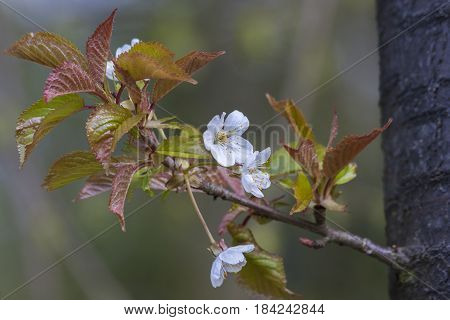 Spring leaves as a background. Composition of nature.