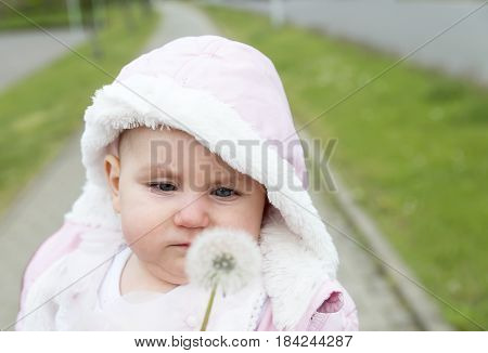 small upset child, displeased looking at a white fluffy dandelion