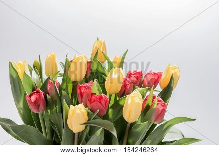 Bunch of yellow and red tulips isolated on white