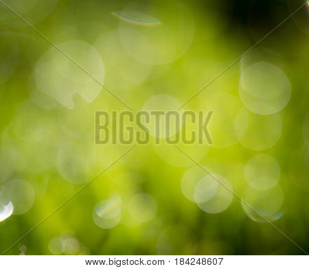 Beautiful green bokeh nature as background. texture