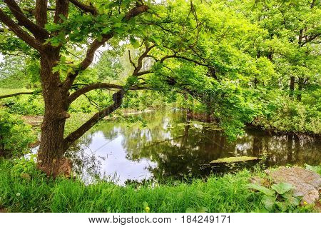 Summer forest landscape with green oaks near the forest creek-deciduous forest tree over the water in the summer forest. Colorful forest summer nature -cloudy summer landscape in natural tones. Forest summer background