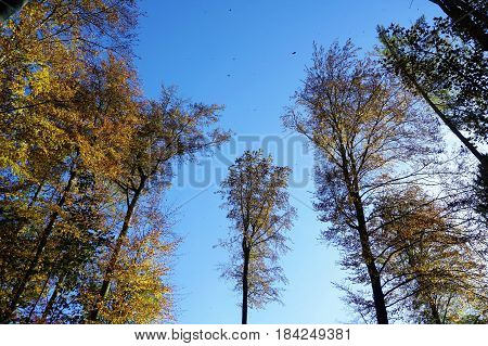 Clearing in forest with leafes in the sky