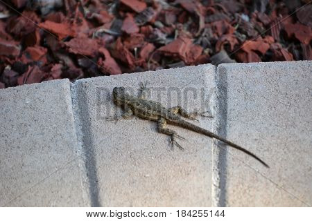 small lizard hanging out on the bricks