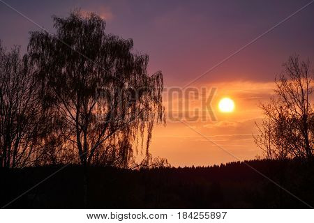 Romantic sunset with a weeping willow in the foreground. Orange and magenta colors.