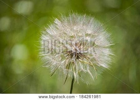 Close up Dreamy dandelion macro and natural background
