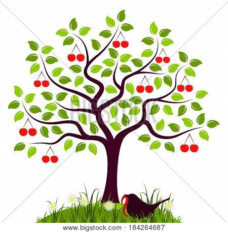 vector cherry tree and bird with worm isolated on white background