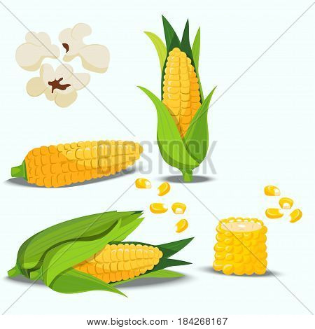 Very high quality original trendy vector set with sweet golden corn. Bunch of Corn. summer farm design elemnts