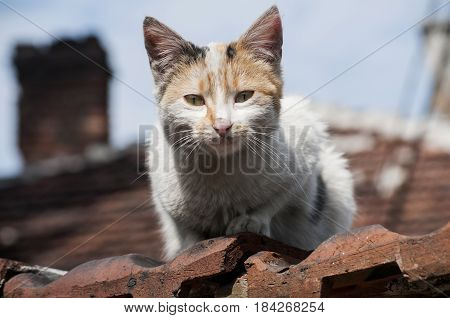 Stray cat on old grunge house wall in sunny day