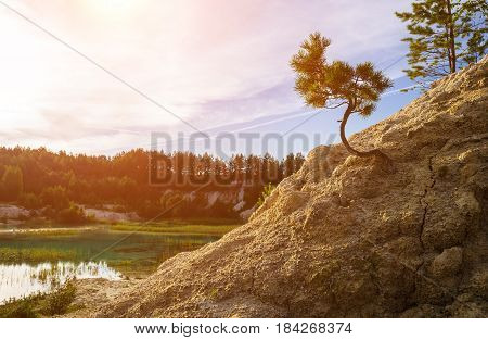 Summer landscape -small fir tree on the kaolin mountain,Southern Urals,Russia. Summer forest nature -closeup of pine tree in summer mountain forest. Small mountain pine in sunny summer day -summer forest landscape. Pine tree in the small kaolin mountain