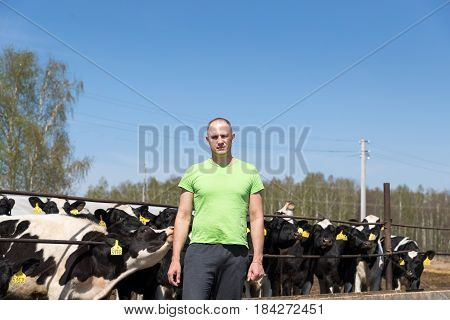 Man or farmer in cowshed on dairy farm.