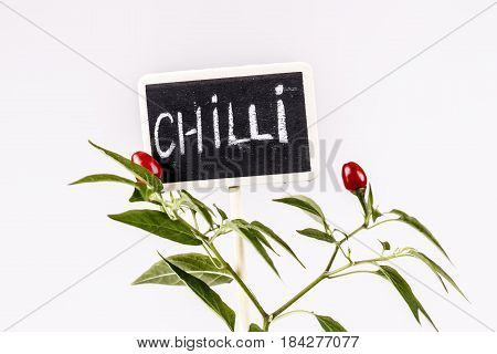 Young Hot Pepper Or Chilli With Sign And Text Chilli