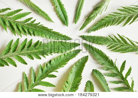 Green Shaggy Carved Plant Leaves